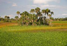 Big Cypress Preserve Florida Everglades