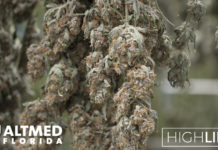 High Life AltMed Florida Marijuana dispensary