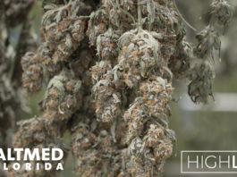 High Life AltMed Florida Marijuana dispensary