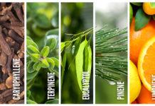 HIGHLIFE Wonderful World Of Terpenes