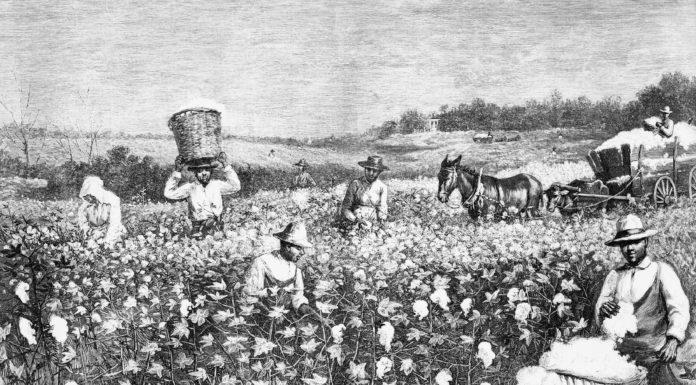 HIGHLIFE Magazine - Where is the Black Farmers Medical Marijuana License in Florida