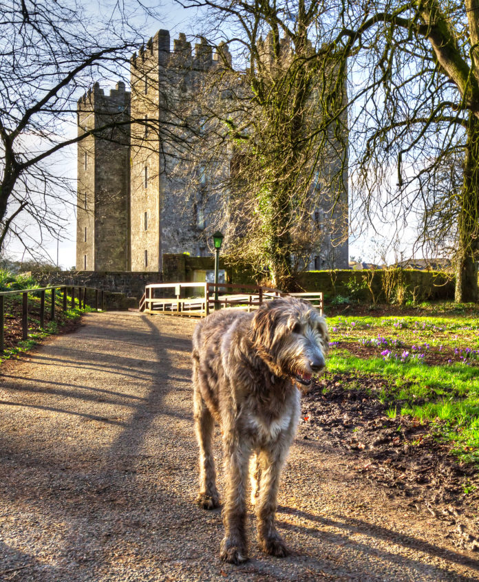 HIGHLIFE Magazine Irish Wolfhound and castle