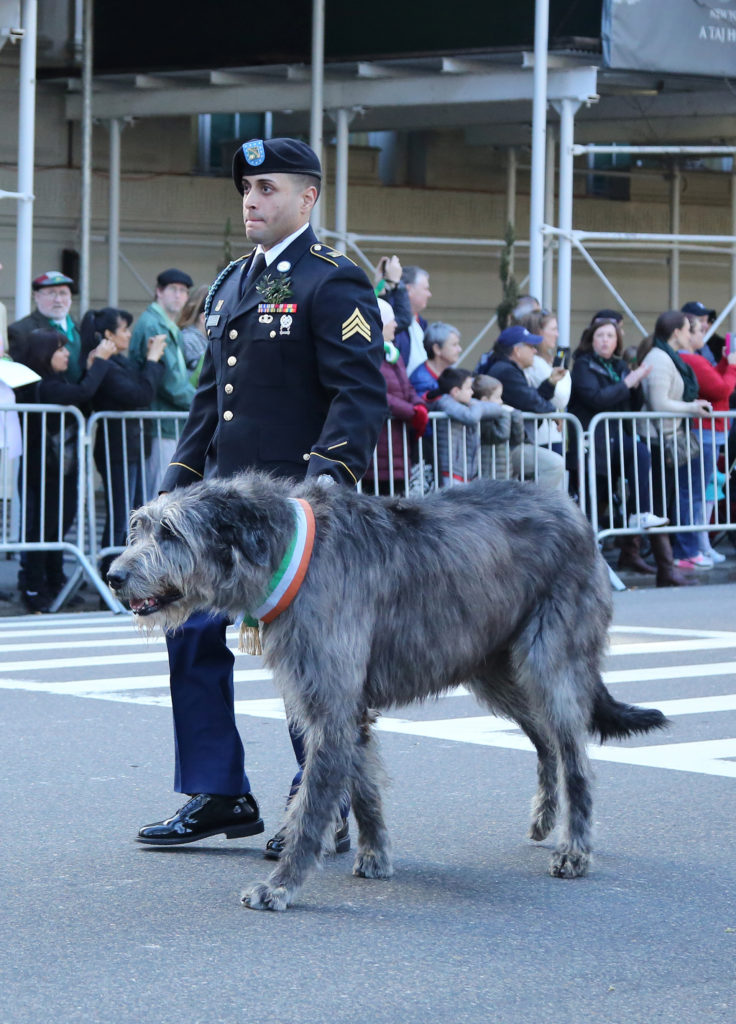 HIGHLIFE Magazine - Irish Wolhound - Army Ranger