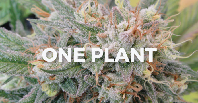 HIGHLIFE March 2020 - One Plant