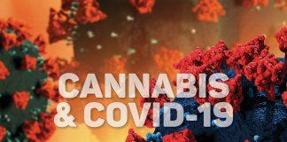 HIGHLIFE Marijuana & Covid-19